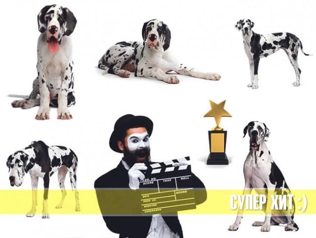 Мужчина с хлопушкой-нумератором в компании собак